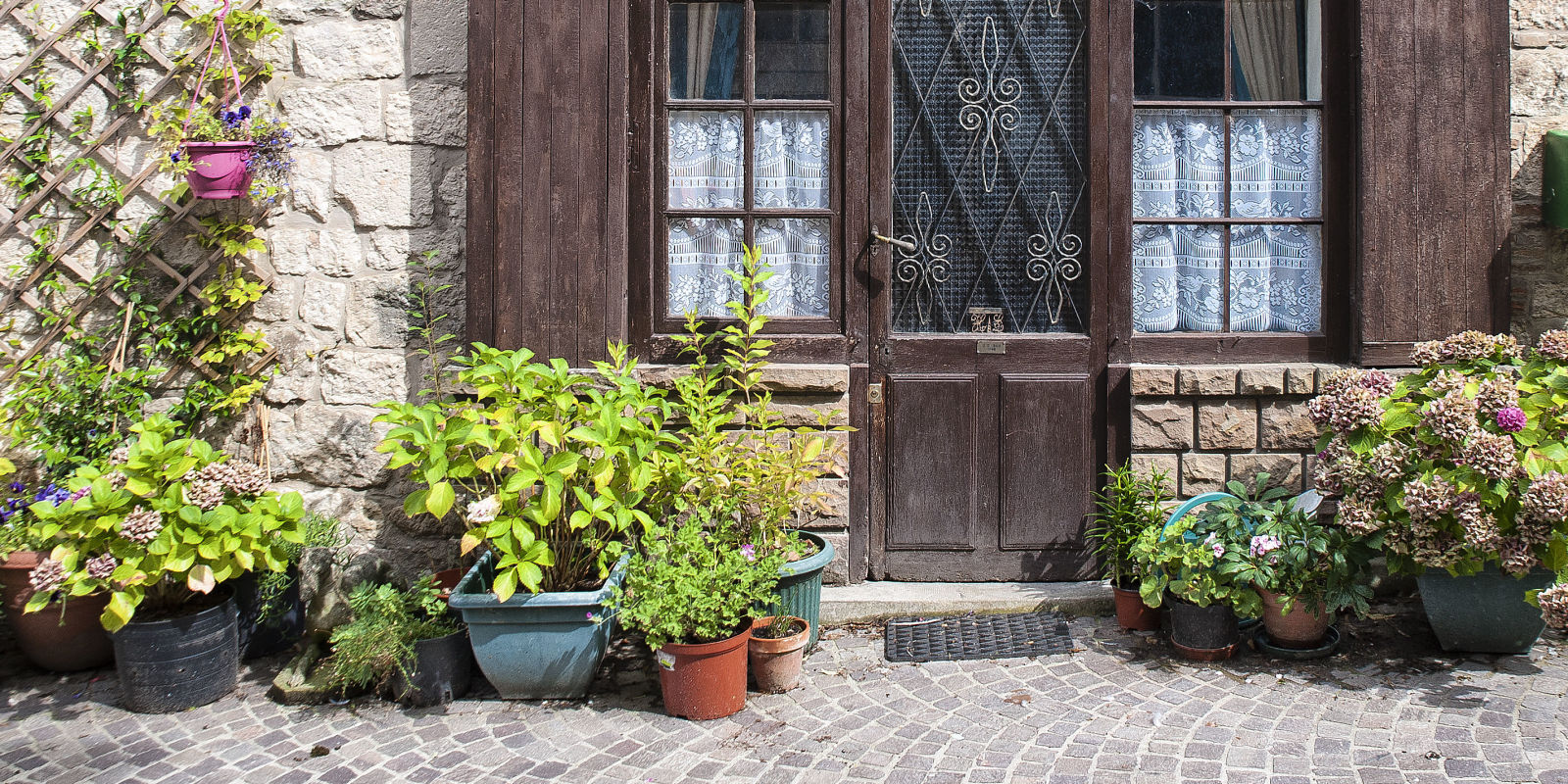 Front Door Plants You Can T Kill Potted Plants That Are