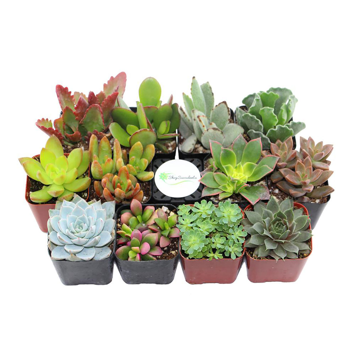 Cool gifts really cool gifts under 50 for everyone on your list - Cool succulent plants ...