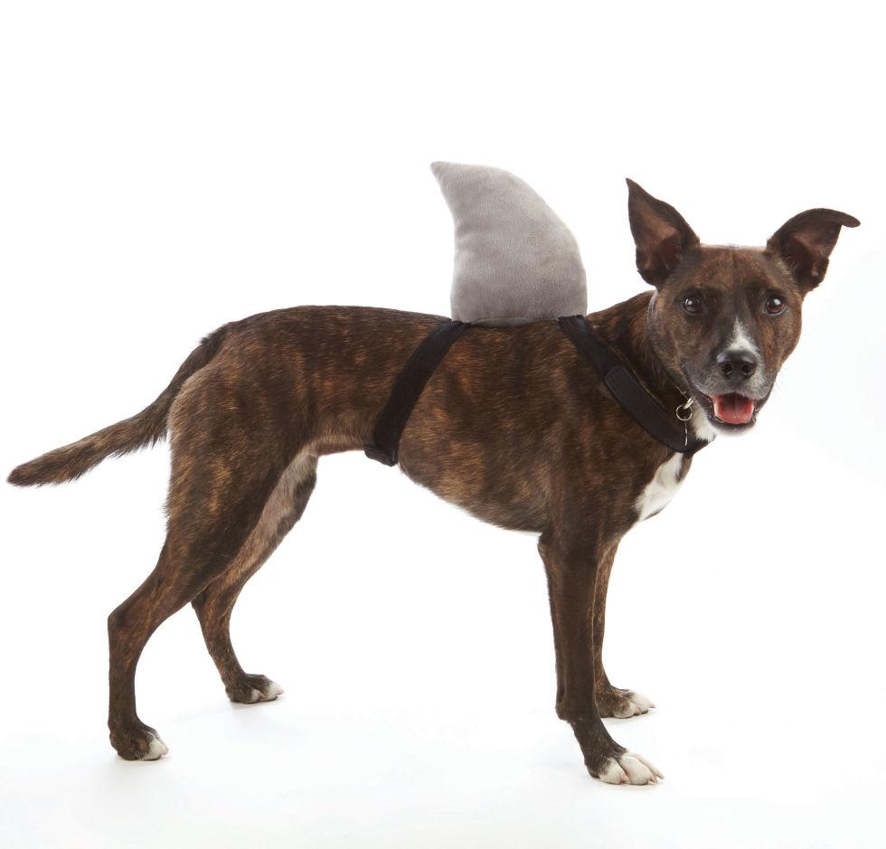 Dog Shark Halloween Costume Dog Halloween Costumes Cute