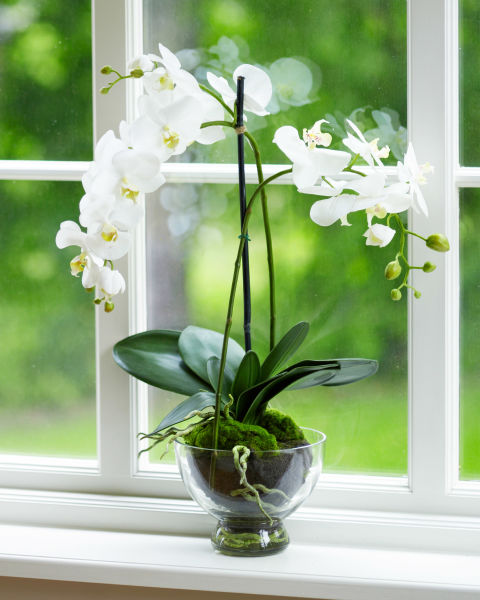 easy indoor flowers - photo #9