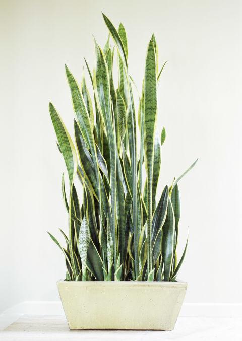 Best Indoor Plants Easy Plants To Grow